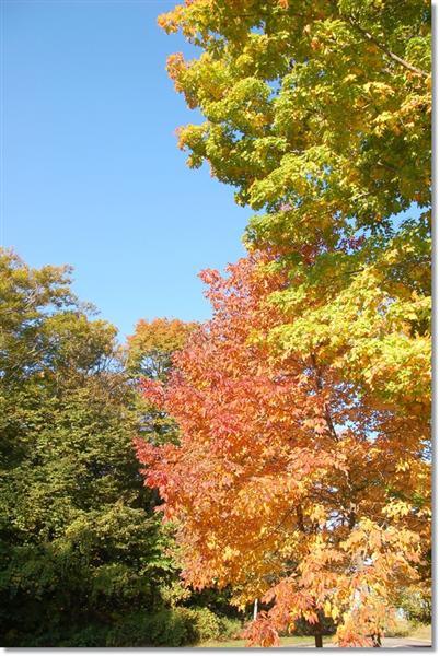Fall Foliage Road Trip (Medium)
