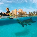 Atlantis - Swimming with the dolphins